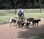 Идея заработка на продаже собак